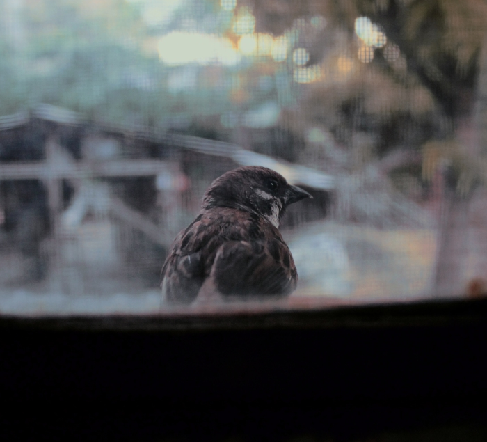 Little birdie sitting by the window