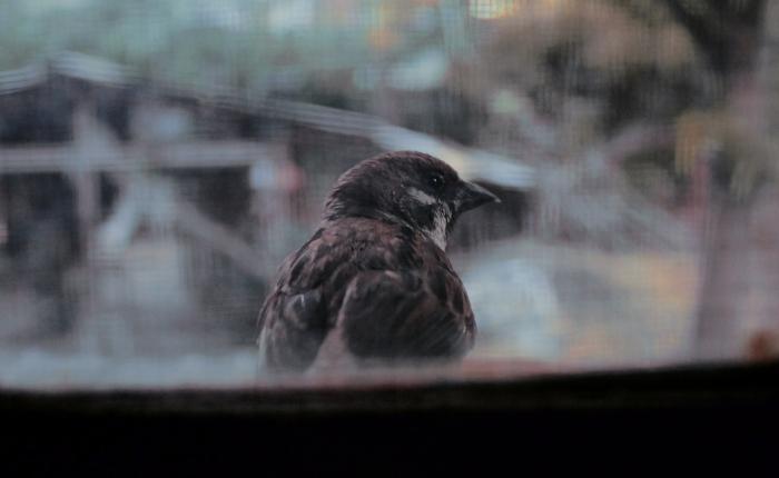 Little birdie sitting by thewindow