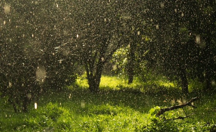 When rain came pouring down from a clearsky…
