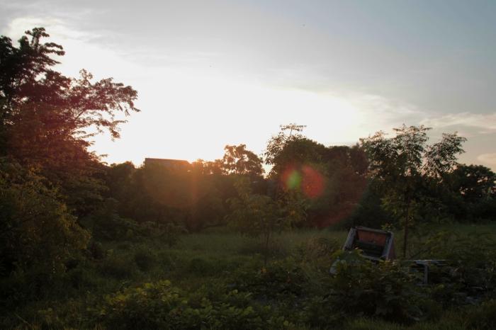 injeenyuhs-forests78